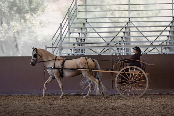 Carriage Driving UNIDENTIFIED