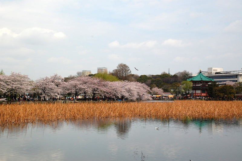 28-Japan10_1033.JPG