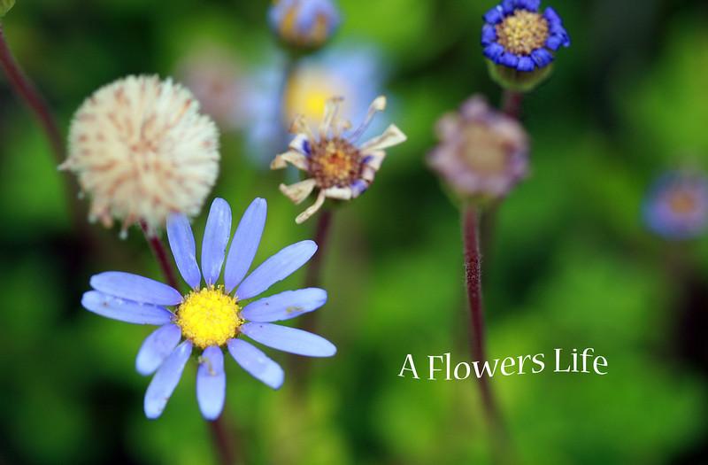 flowers life.jpg