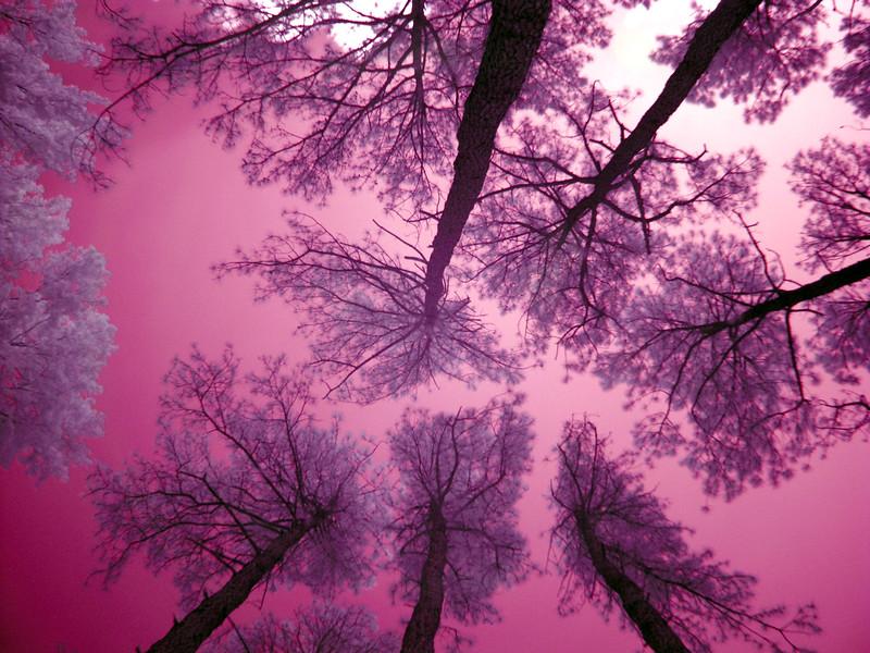 Virginia Trip 2006 - Pine Grove 07 IR Looking Up (levels adj)