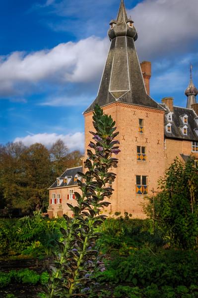 Plant on castle backdrop
