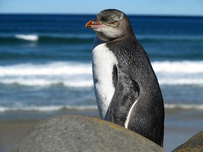 NZ Fauna