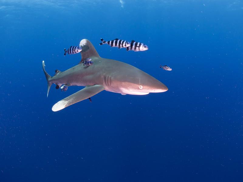 SharkQuest_29Jun18_0375.jpg