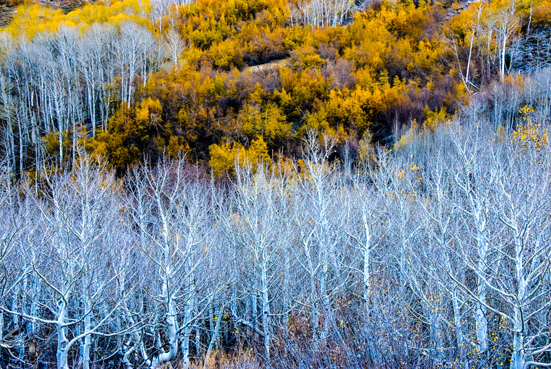 Fall Color 11 Trees.jpg