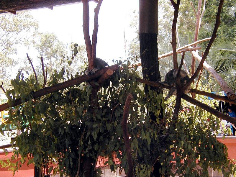 14.  Australia Zoo.JPG