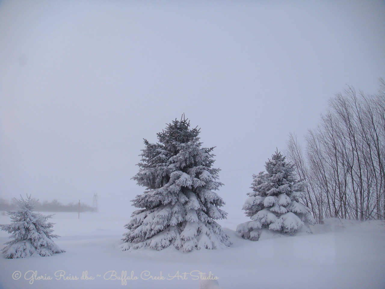 Snow swallowing all the trees and obscuring the view