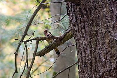 Tree Clinging Birds