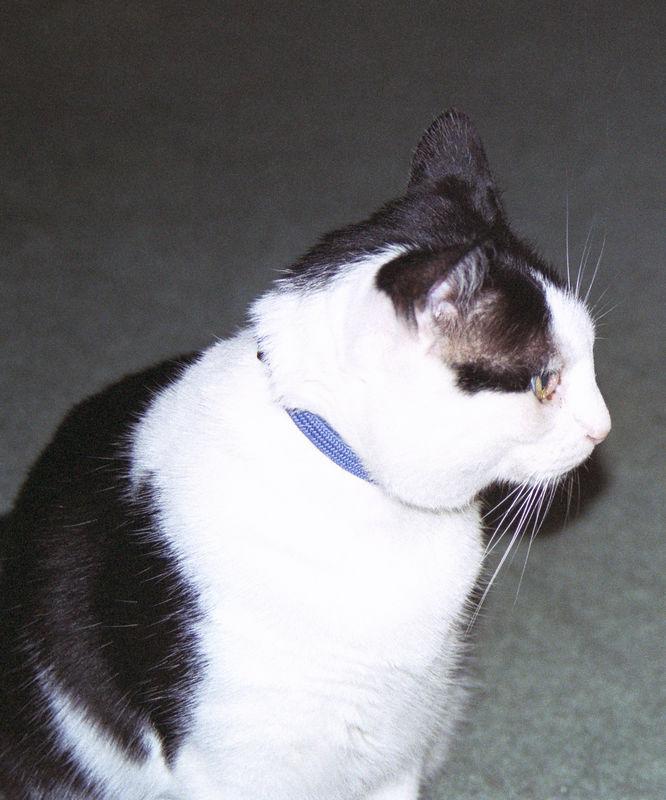 2003 12 - Cats 47.jpg