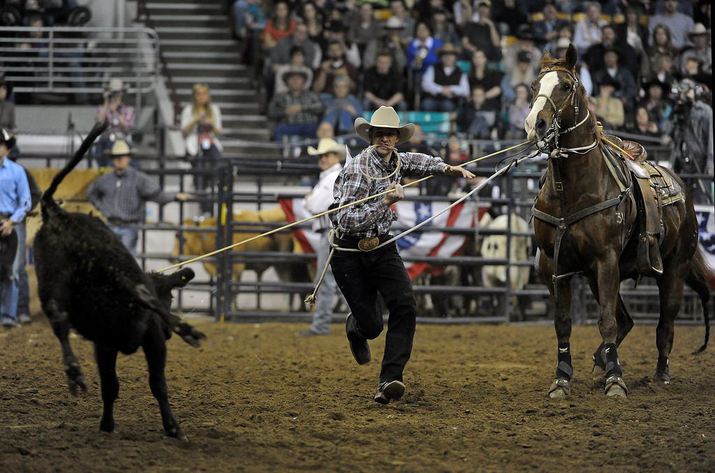 . DENVER, CO- JANUARY 27:   Shane Hanchey, of Sulphur, LA, ropes a calf during the tie down roping event in the rodeo. He won the event.  The final day of the 2013 National Western Stock show was Sunday, January 27th.  One of the big events for the day was the PRCA Pro Rodeo finals in the Coliseum.  The event featured bareback riding, steer wrestling, team roping, saddle bronc riding, tie down roping, barrel racing and bull riding.  (Photo By Helen H. Richardson/ The Denver Post)