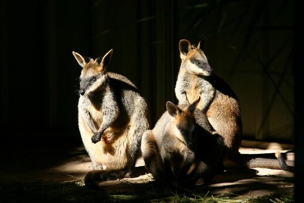 Australia May2010