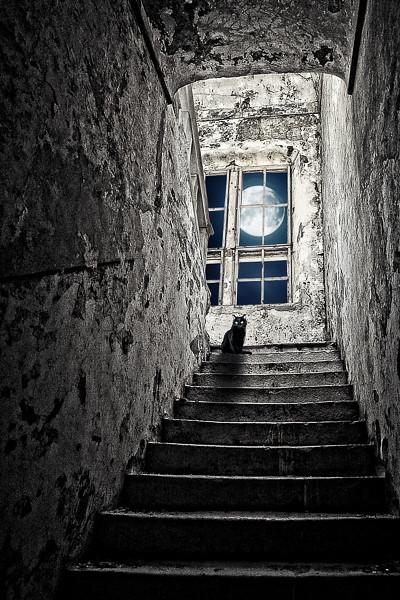 Moonl;ight shadow