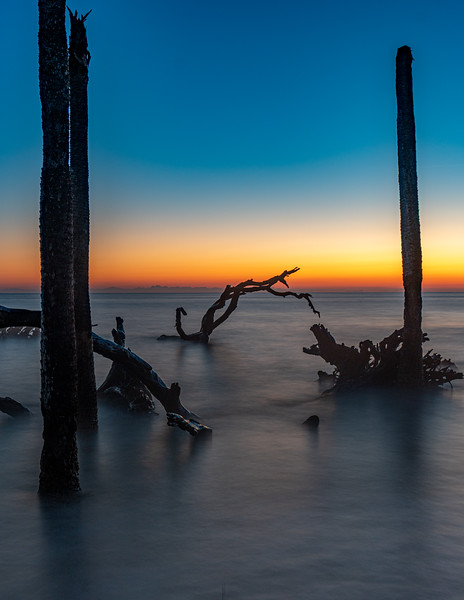 Driftwood_3.jpg