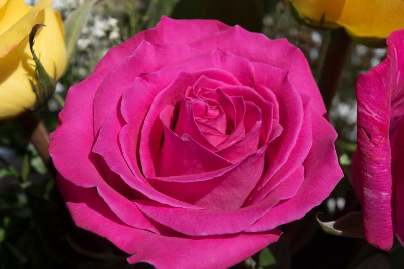 ValentinesDayRoses28.jpg