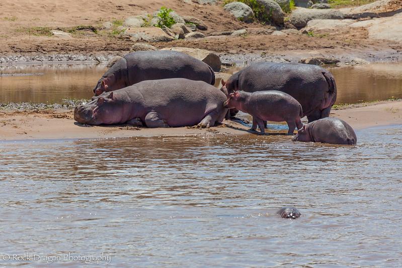 North_Serengeti-24.jpg