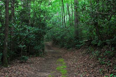 Grapeyard Ridge Trail