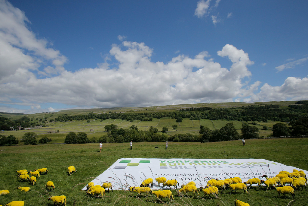 . Sheep that have painted yellow walk in a meadow during the first stage of the Tour de France cycling race over 190.5 kilometers (118.4 miles) with start in Leeds and finish in Harrogate, England, Saturday, July 5, 2014. (AP Photo/Christophe Ena)