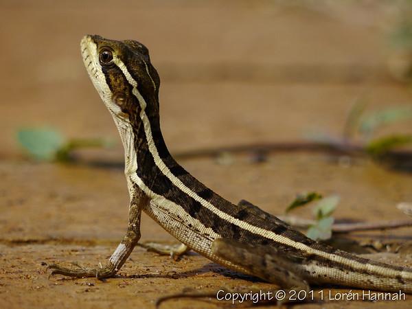 L's FL Reptiles