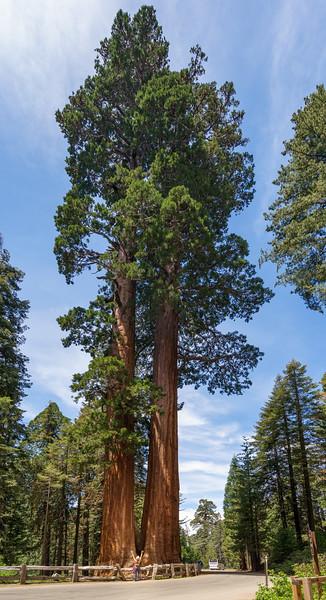 Sequoia -090616-087.jpg
