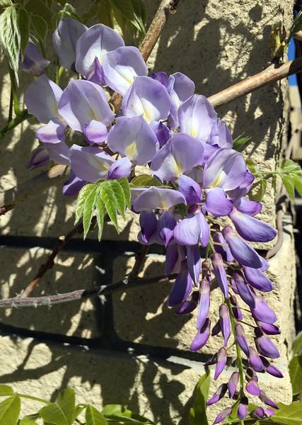 march flower.jpg
