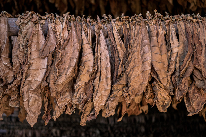 Tobacco drying, Viñales Valley
