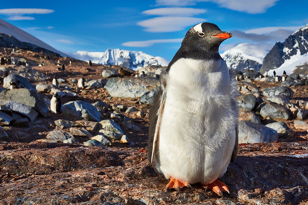 Antarctica Highlights