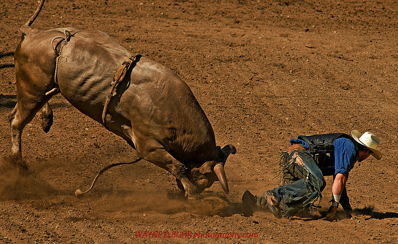 COOMBS RODEO-2009-3761A.jpg
