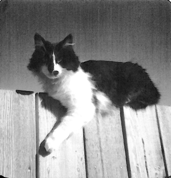 Kitty (11).jpg