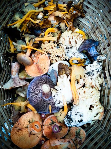 mushrooms in basket.jpg