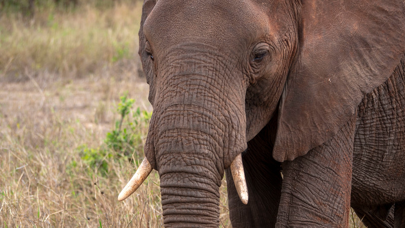 Tanzania-Tarangire-National-Park-Safari-Elephant-10.jpg