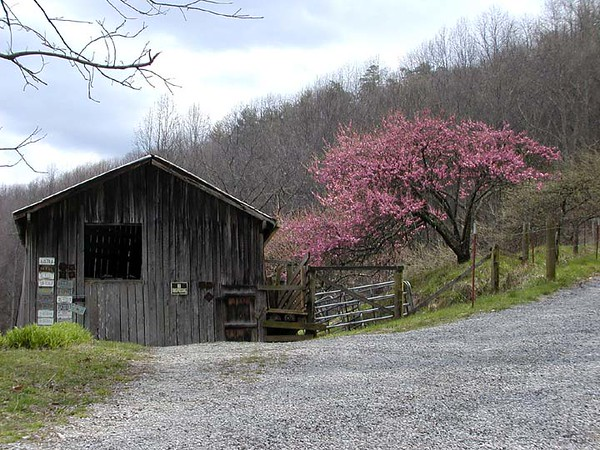 Old Barn and Peach blossoms along Schoolhouse Gap Road