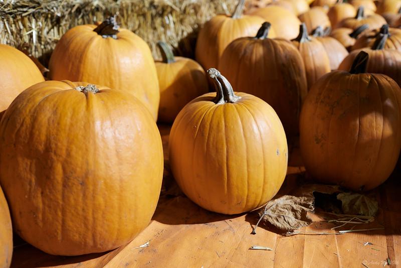pumpkin__45.jpg