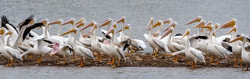 Hiwassee Wildlife Refuge