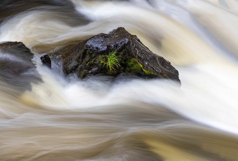 Rogue River-17.jpg