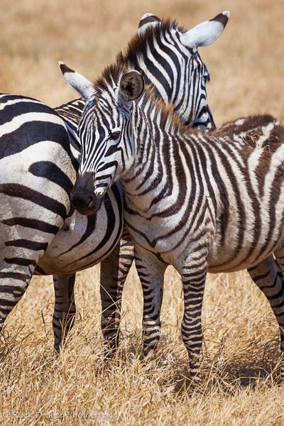Ngorongoro-51.jpg