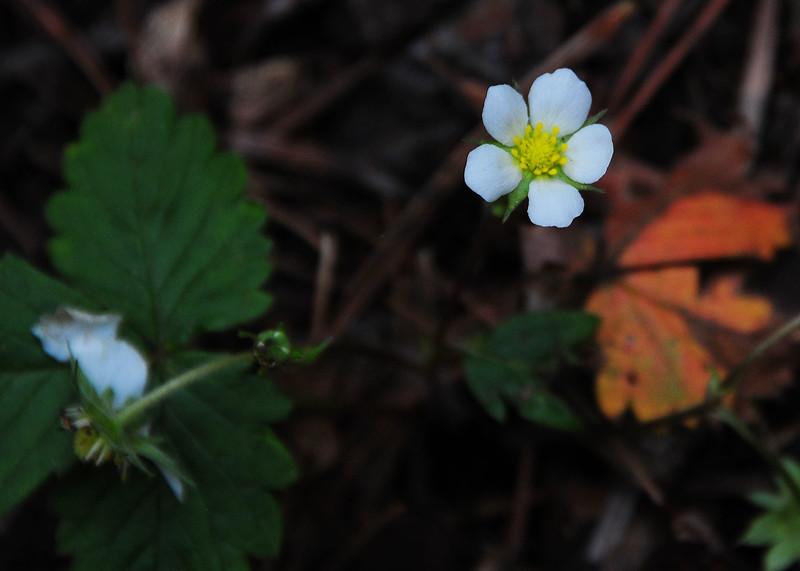 NEA_3067-7x5-Flower.jpg