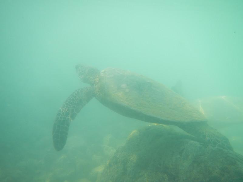Hawaii2019-109.jpg