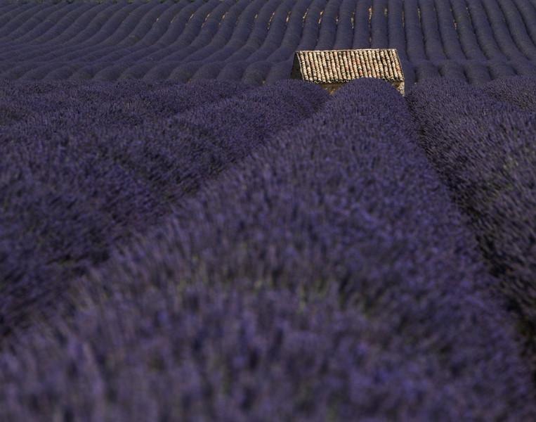 Lavender8-Edit.jpg