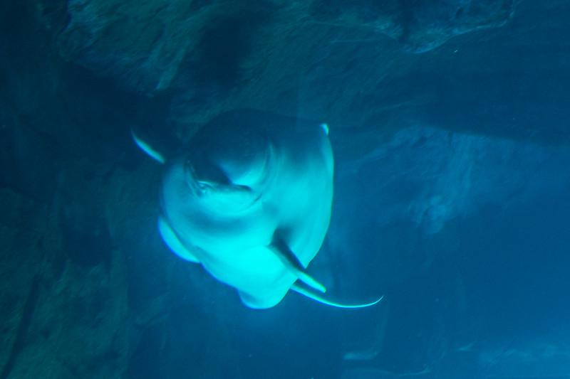 GA Aquarium with Linc, Ali & Abe-146.jpg