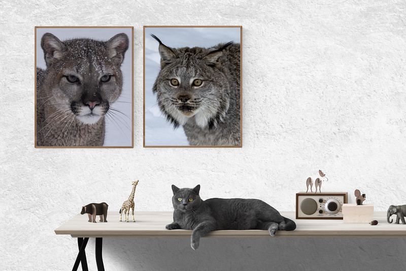 cats on wall.jpg