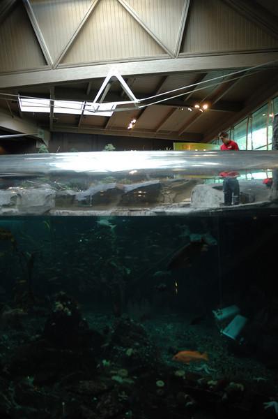 Vancouver Aquarium - 10/18/2008
