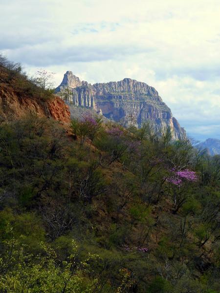 Cliffs and Jacarandas.
