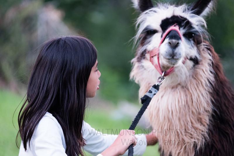 Jay Waltmunson Photography - Wallowa Llamas Reunion - 045.jpg