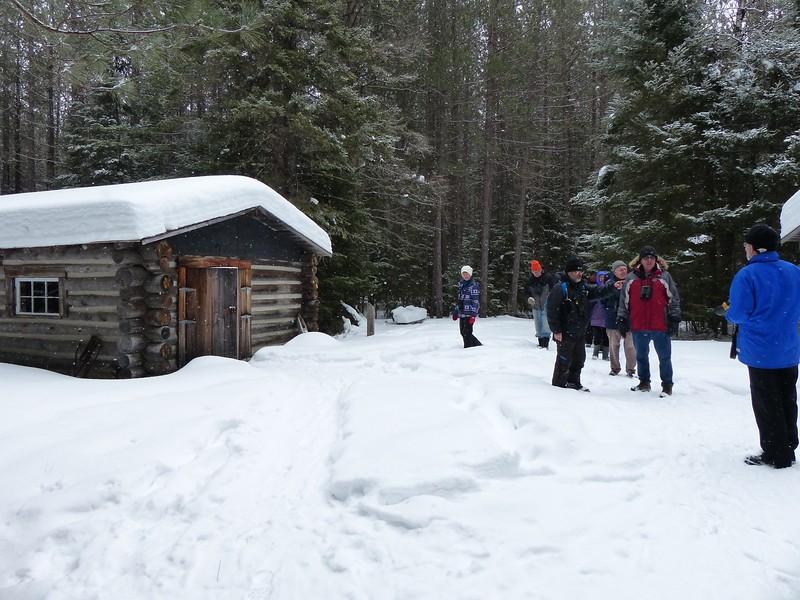 Logging Museum Trail building