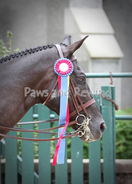 Ladies Hunter Side Saddle Champion (Sunday)
