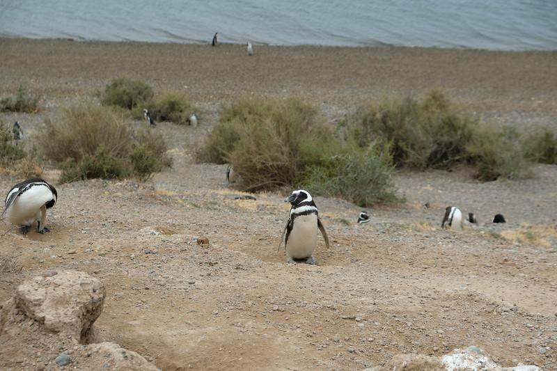 Blissful Penguin