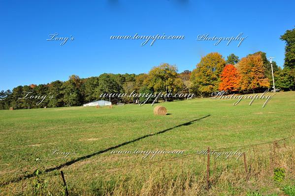 Broadrick Farm 1 Nov 09