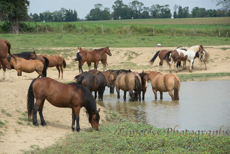 2014_Horses_Woodstown_2.jpg
