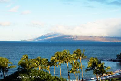 Maui 14
