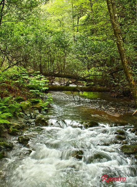 Muir Woods IMG_3727.jpg