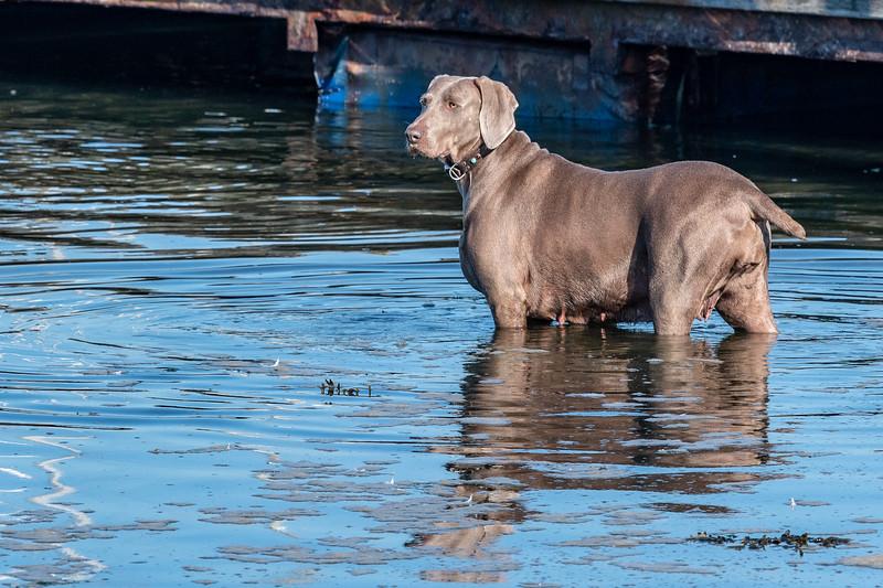 Canine-6.jpg